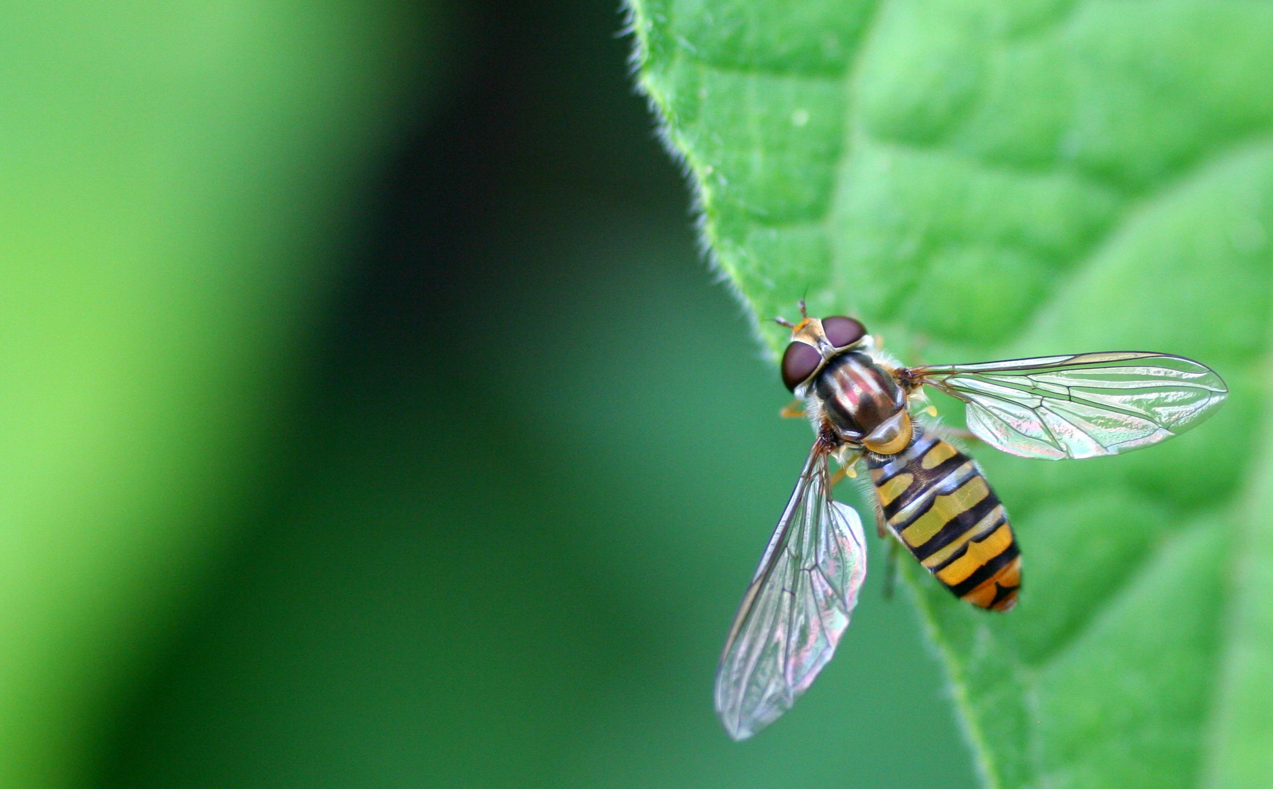 Biodiversit paysagiste jardin vivant for Jardin vivant